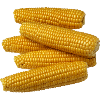 Насіння кукурудзи. Велика фасовка.