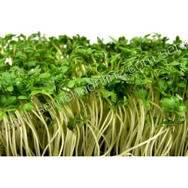 Насіння мікрозелені Крес-Салат, 100г