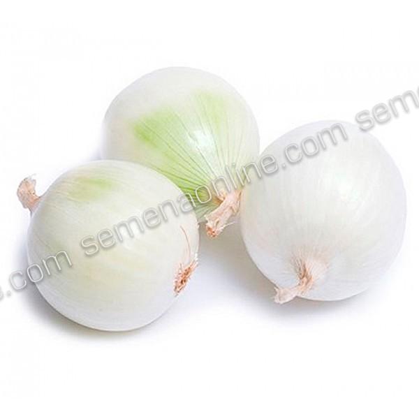 Семена лука Агостана белый (Италия), 500 шт