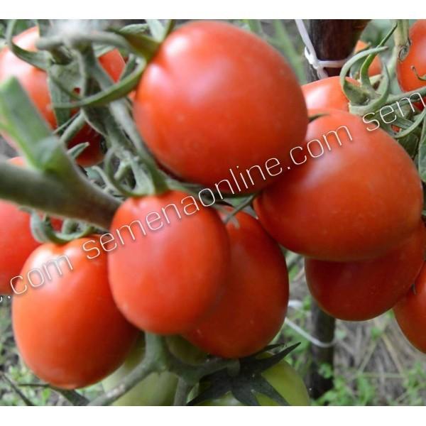 Семена томата инкрустированный Рио Фуего (Германия), 1г