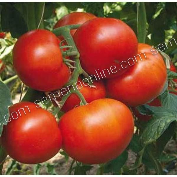 Семена томата Фантастина F1, 500 шт.