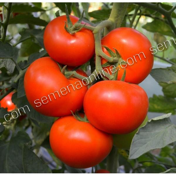 Семена томата Ричи F1, 5гр.