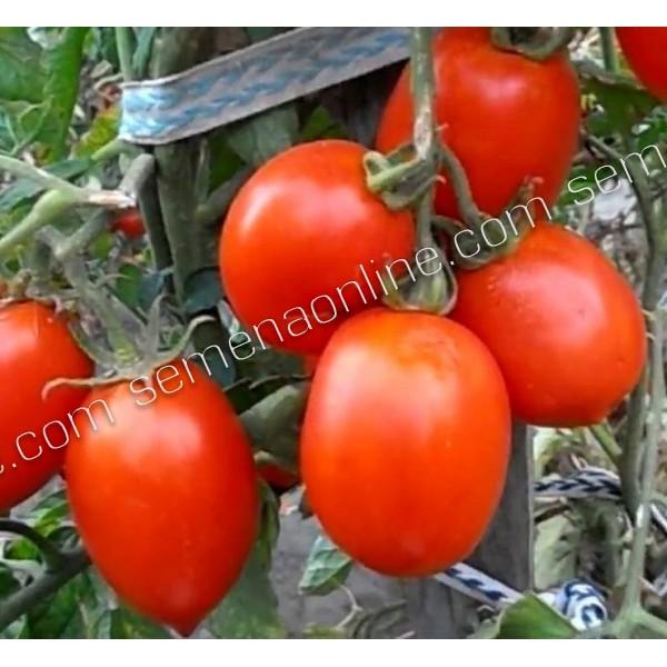 Семена томата Рио Гранде, 100 гр., банка.