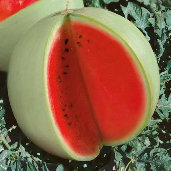 Семена арбуза Снежок, 100г