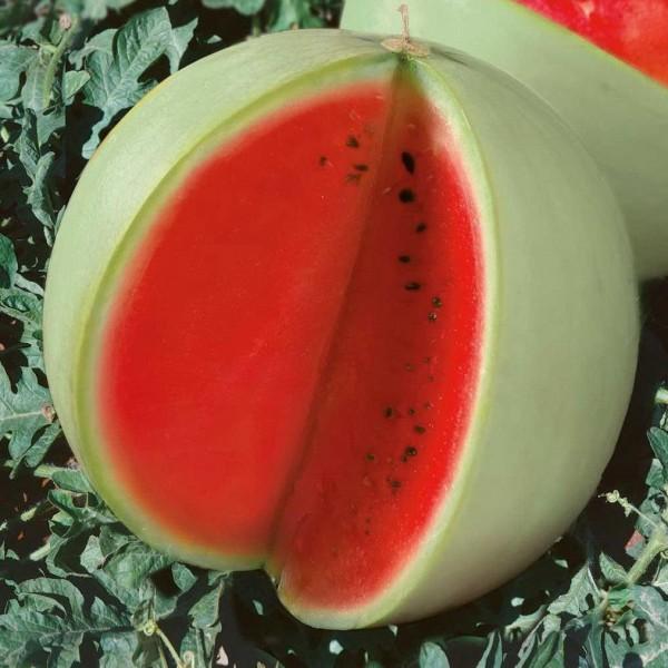 Семена арбуза Цельнолистный, 100г