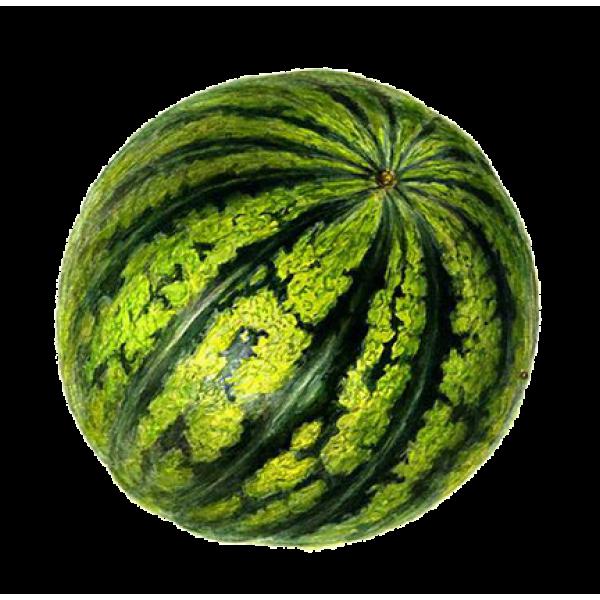 Семена арбуза Княжич, 100г