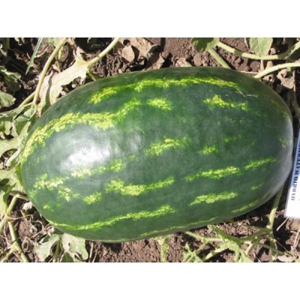 Семена арбуза Роял Маджестик, 0,5кг