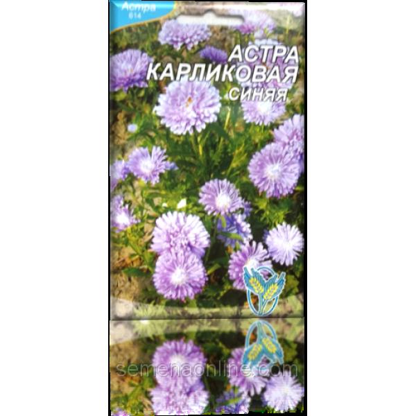 Насіння айстри Карликова синя, 100 шт.
