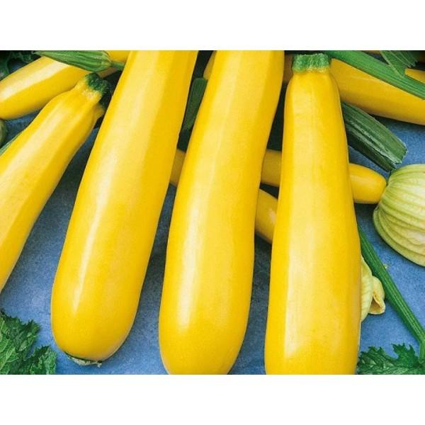 Семена кабачка Золотинка, 0,5 кг
