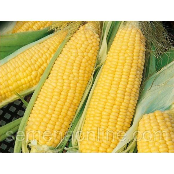 Насіння кукурудзи Ароматна, 100г