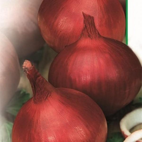 Насіння цибулі Веселка червоний, 0,5 кг