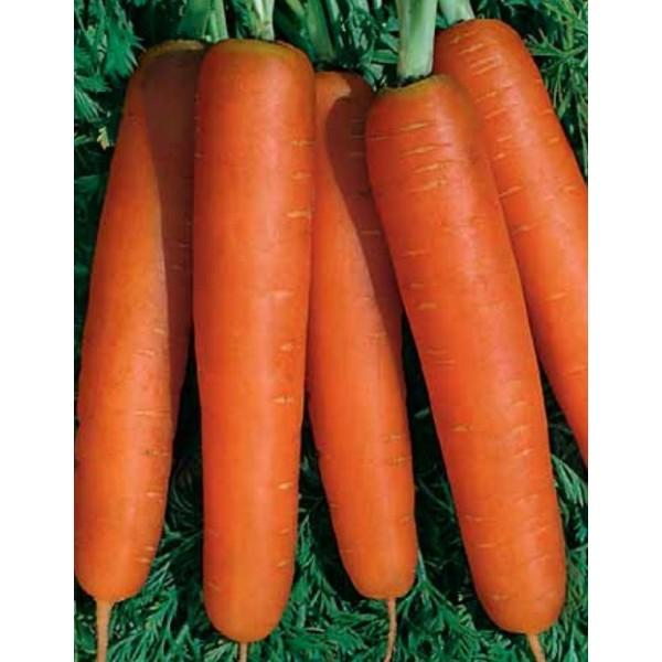 Насіння моркви Нантська, 100г