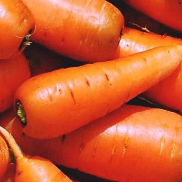 Насіння моркви Оленка, 100г