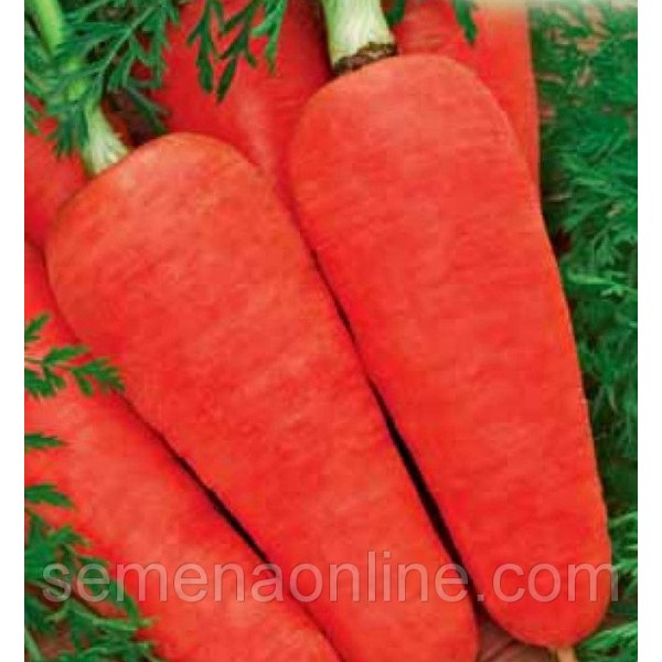 Насіння моркви Московська Зимова, 100г