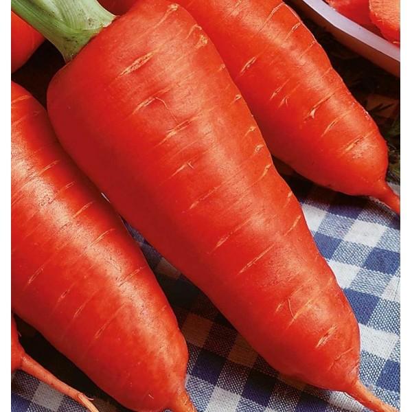 Насіння моркви Шантане Сквирська, 1кг