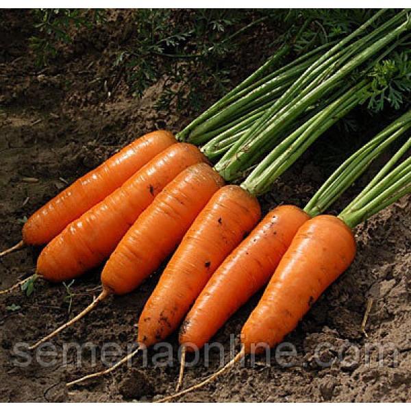 """Семена Моркови """"Шантане Ред Коред"""", 500 грамм"""