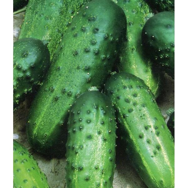 Семена огурца Одис F1, 0,5кг