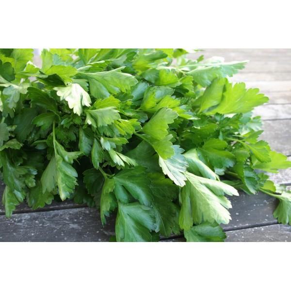 Насіння петрушки Фестиваль листова, 0,5 кг