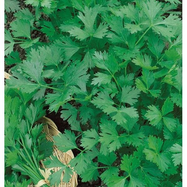 Насіння петрушки Карнавал листова, 0,5 кг