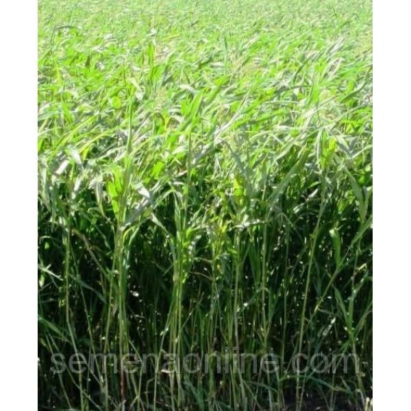 Семена Суданская трава (Сорго Суданское), 100г
