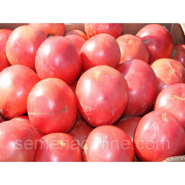 Семена Томата Тарпан F1 розовый, 1000 семян