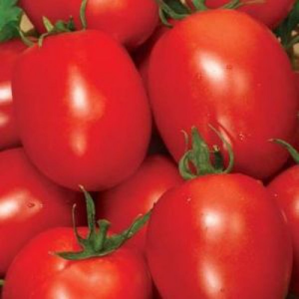 Семена томата Рио Фуего, 0,5кг