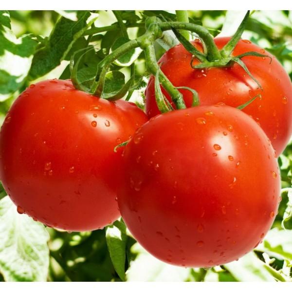Семена томата Нота, 0,5кг