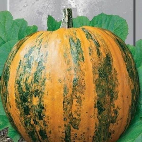 Семена тыквы Украинская Многоплодная, 0,5кг