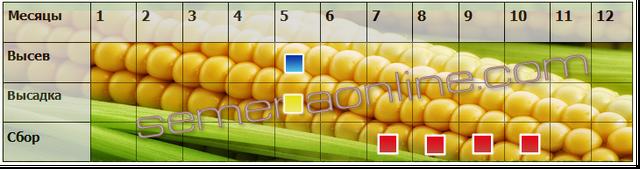 Посів-прибирання кукурудзи