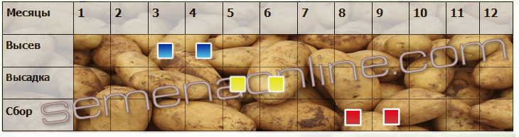Посів-прибирання картоплі