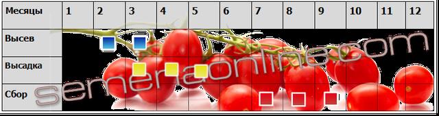Посев-уборка томатов