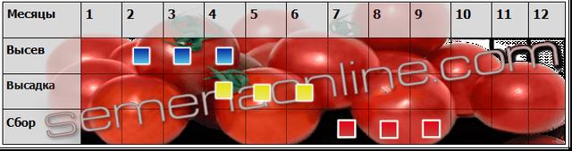 Посів-прибирання томатів