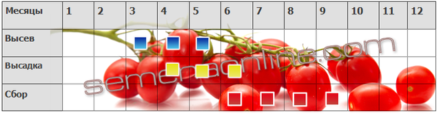 висів збір томатів